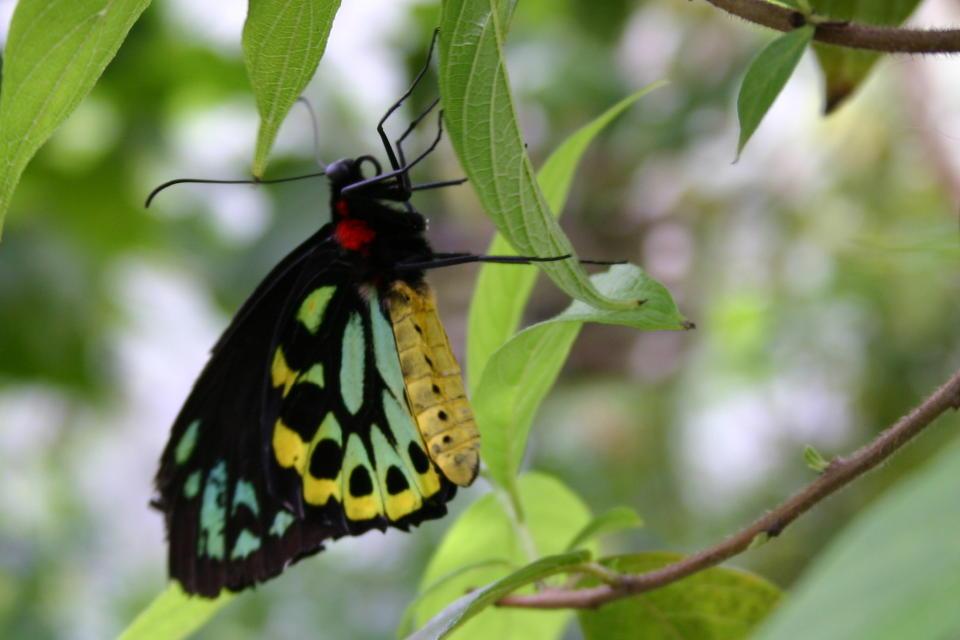 Butterfly  species unkonwnButterfly Species Names