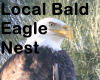 **6aWatching Eagle Nest