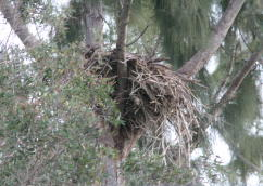 Eagle Nest April 2008