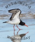 **8e WILD BIRD WEDNESDAY